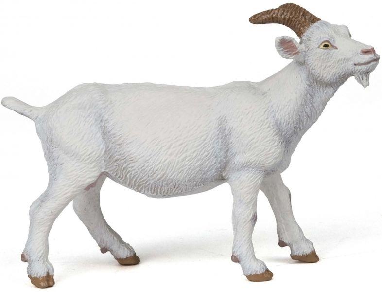 Chèvre Blanche à cornes
