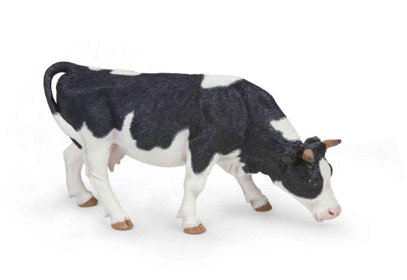 Vache Noire et blanche broutant