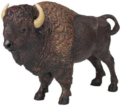 Bison D'amérique